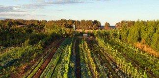 Doppia coltivazione e agroforestale food forest