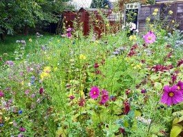 Fiori selvatici giardino commestibile