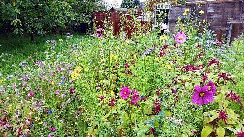 Il Ruolo Fondamentale Di Prati E Fiori Selvatici Nel Giardino