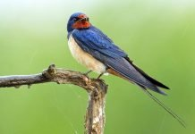 Birdgardening permacultura e diversità