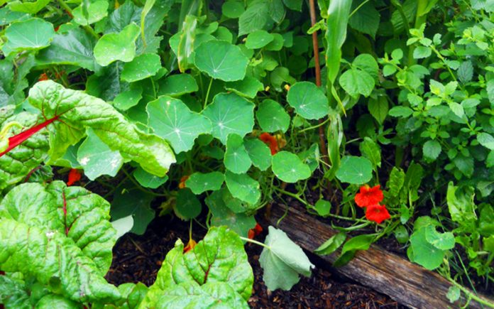 orto giardino permacultura