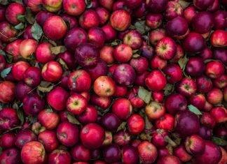 permacultura alberi frutta