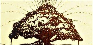 Bill Mollison manuale alberi