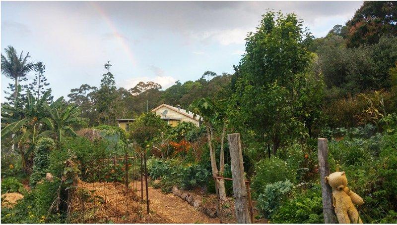corso permacultura australia
