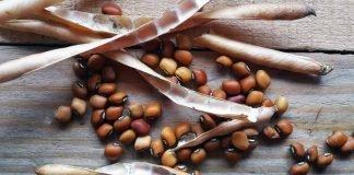 semi antichi siciliani permacultura