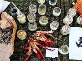 semi indipenenti permacultura sicilia