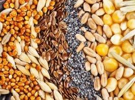 Mondo semi eva polare permacultura