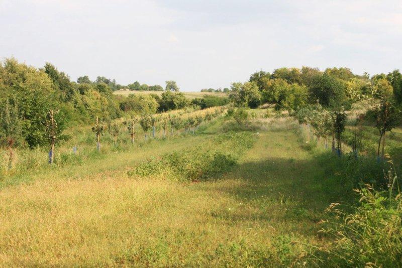 biodiversità suhi dol