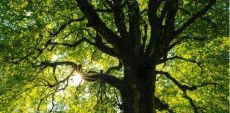 Alberi Permacultura cattura energia