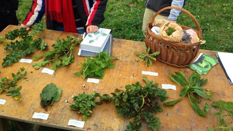piante spontanee csa semi comunita