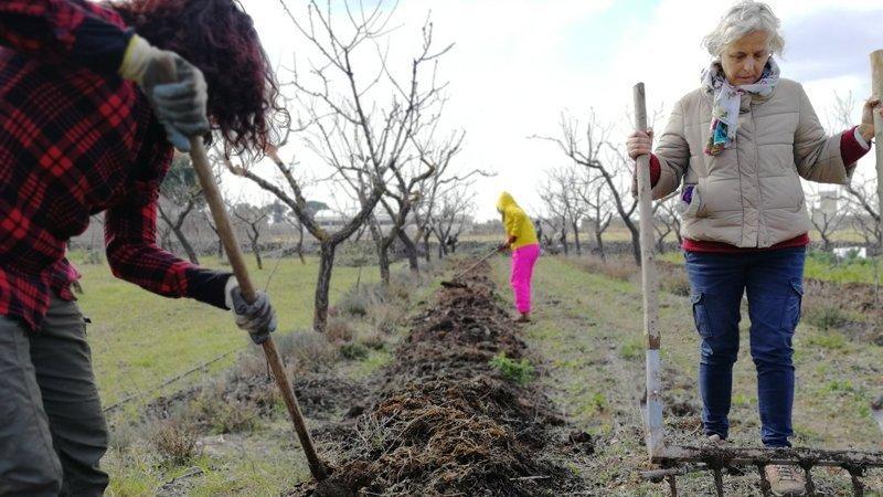 Giuseppe Sannicandro Sistemi agroforestali