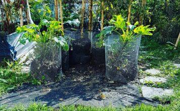 Elettrocoltura e Permacultura
