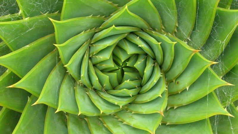 Spirale lavoro che riconnette