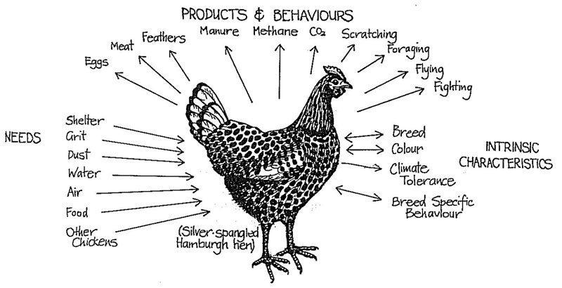 funzioni pollo permacultura