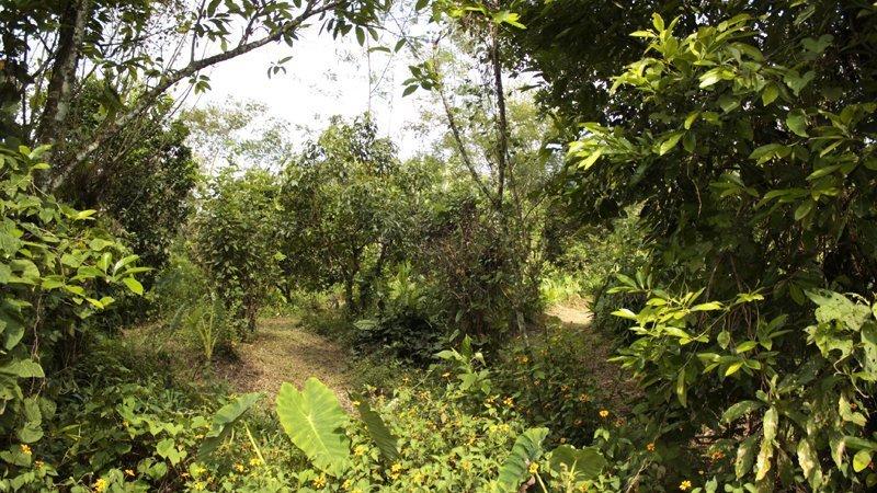 Bosco commestibile Coop Las Cañadas