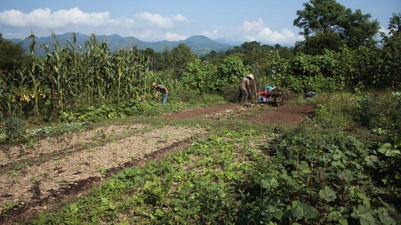 Orto Biointensivo Coop Las Cañadas
