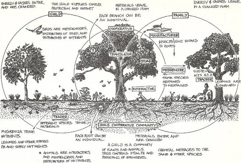 Permaculture designers manual