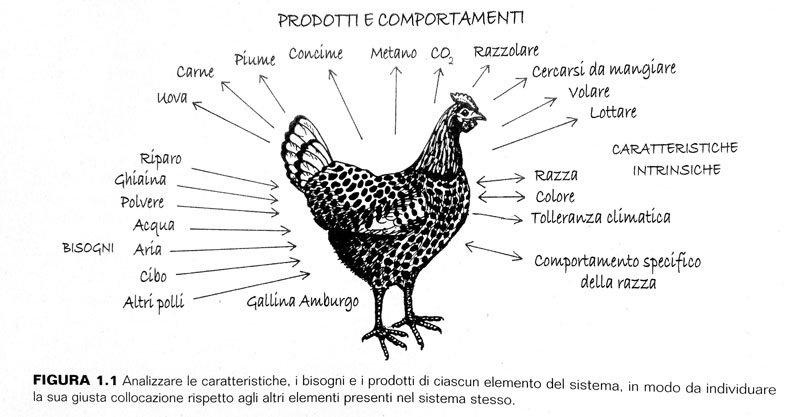 Analisi-funzionale-gallina-Permacultura