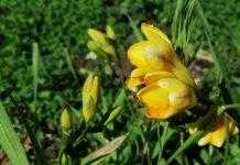 primavera permacultura
