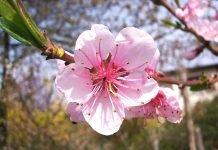 primavera permacultura coronavirus