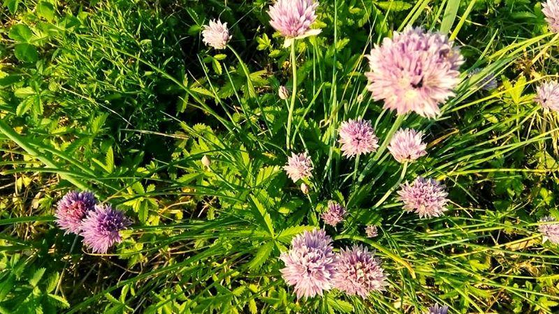 piante sinergia gilde permaculture